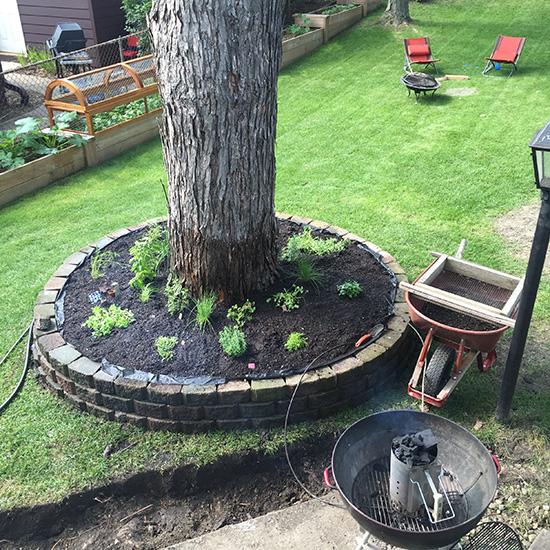 Diy Tree Ring Amp Herb Garden Remodern Ranch